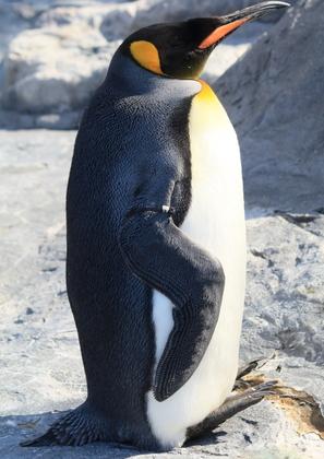 33_3ペンギン.JPG