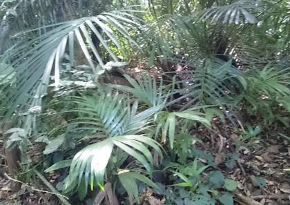 10米原熱帯原生林.JPG