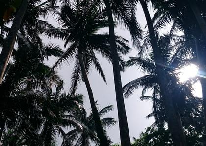 11米原熱帯原生林.JPG