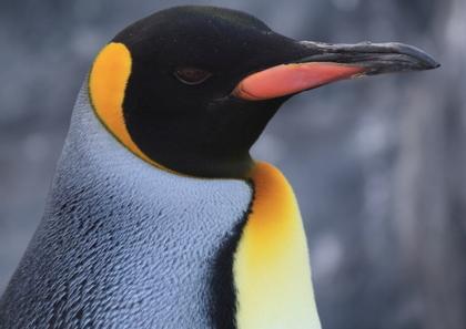 33_4ペンギン.JPG